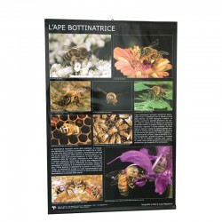 POSTER THE FORAGING BEE