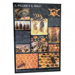 POSTER POLLEN AND HONEY